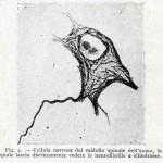 1922-Stefanelli-05