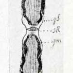 1922-Stefanelli-09