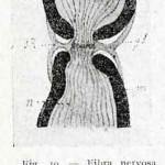 1922-Stefanelli-10
