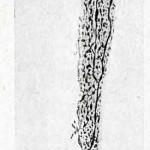 1922-Stefanelli-23