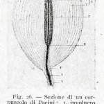 1922-Stefanelli-26