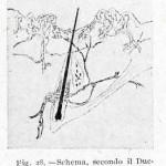 1922-Stefanelli-28