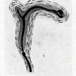 1922-Stefanelli-33
