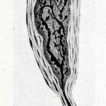 1922-Stefanelli-34