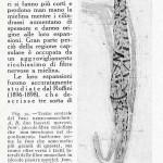 1922-Stefanelli-38