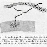 1922-Stefanelli-39