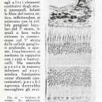 1922-Stefanelli-46