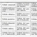 1922-Stefanelli-48