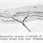 1922-Stefanelli-51