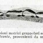1922-Stefanelli-53