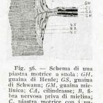 1922-Stefanelli-54