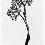 1922-Stefanelli-55