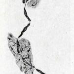 1922-Stefanelli-57
