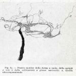 1922-Stefanelli-61