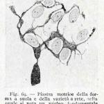 1922-Stefanelli-62