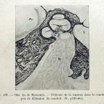 1924-Cushing-Harvey-34