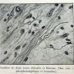 1924-Cushing-Harvey-44