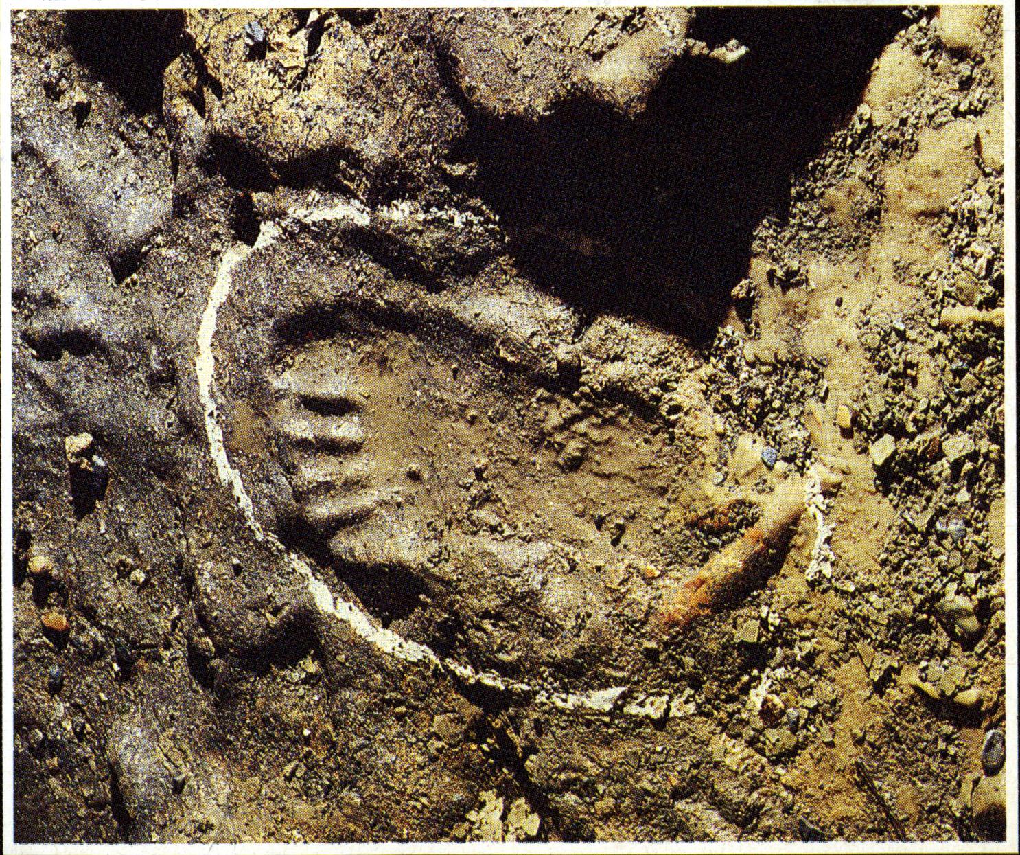 Impronta di piede nel fangp da Homo Neanderthal. Grotta di Toirano, Savona