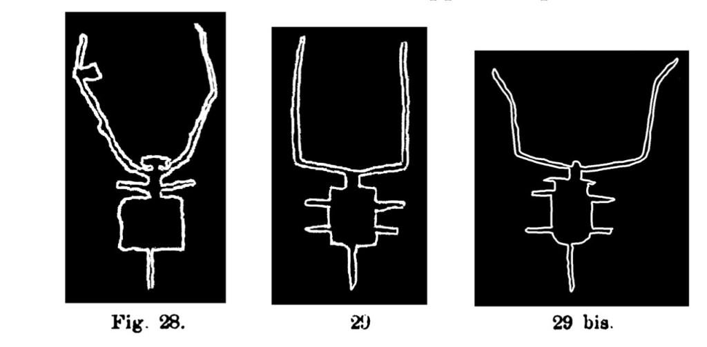 Fig. 28, 29, 29 bis. Immagine schematica di bovino. Fontanalba. Assai ridotte (Bicknell).
