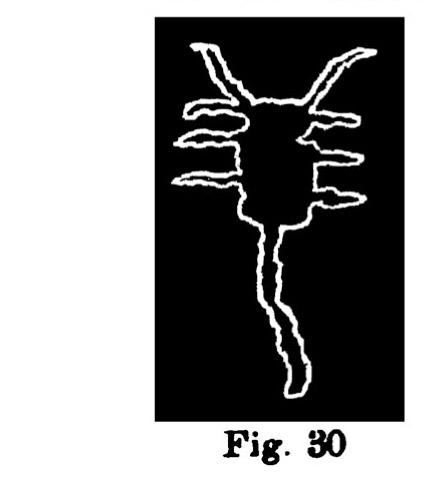 Fig. 30. Immagini schematiche di bovini. Fontanalba. Assai ridotte (Bicknell).