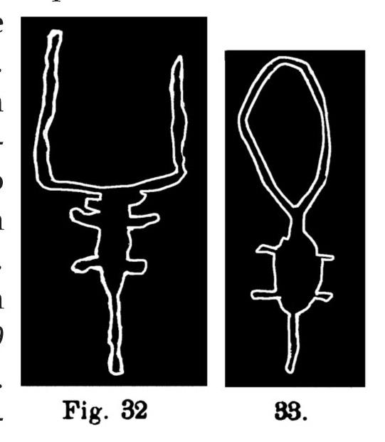Fig. 30. Immagini schematiche di bovini. Fontanalba. La prima nell'originale misura m. 0,41 di lunghezza (Bicknell).