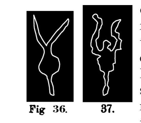 Fig. 36 e 37. Schemi o simboli di bovini. Fontanalba. Assai ridotti (Bicknell).