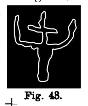 Fig. 43. Simbolo di bovino con segno numerico. Val d'Inferno. Lunghezza all'originale m. 0,15 (Rivière).