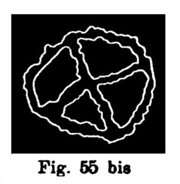 Fig. 55 bis. Segno numerale. Val d'Inferno. Larghezza dell'originale m. 0,156 (Rivière).
