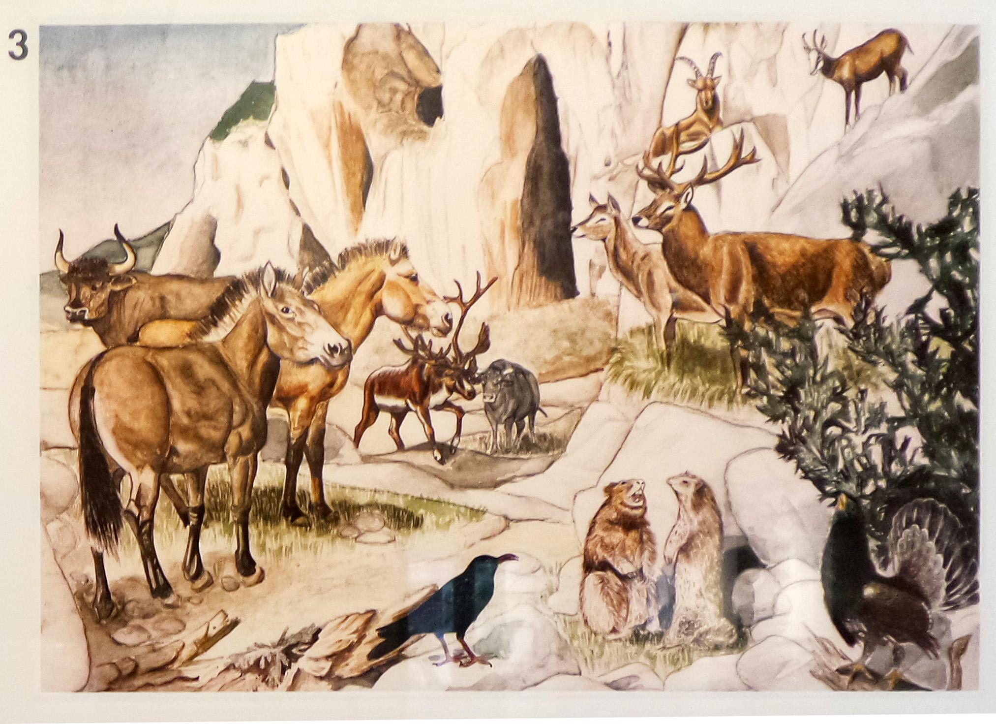 09-2 Fauna durante il Wurm